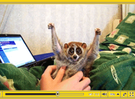 Kampania Internet Explorer 8