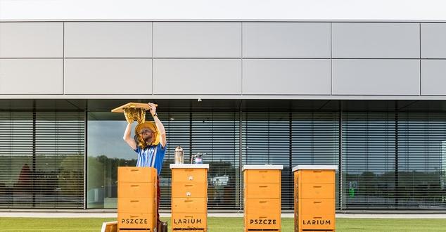 Pszczela pasieka na dachu salonu Ferrari