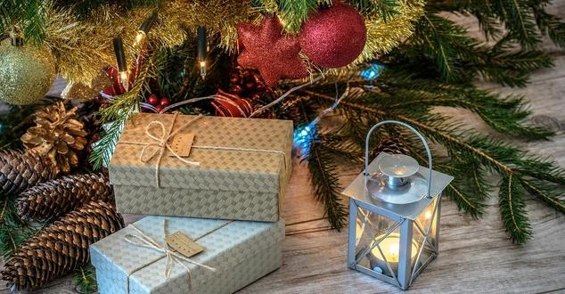 Wypożyczenie choinki na święta. Internauci zdecydują, gdzie ponownie posadzić drzewka