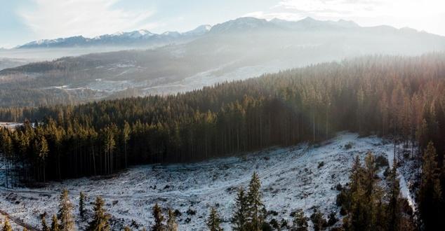 Las spod znaku Volvo. Marka posadzi 13 tysięcy drzew