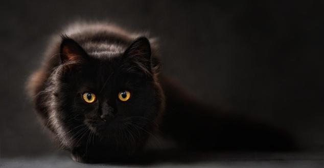 czarny kot, przesądy, strach, fot. ClaudiaWollesen, pixabay