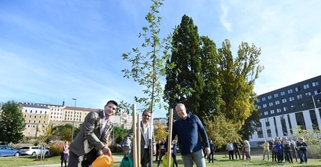 Skoda posadziła milion drzew w ramach strategii Green Future