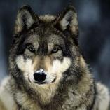 malwina wilk